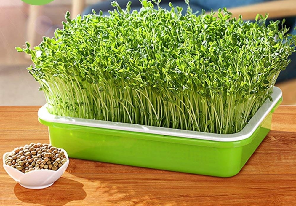 Top 10 Best Seed Sprouter Trays In 2021 Reviews