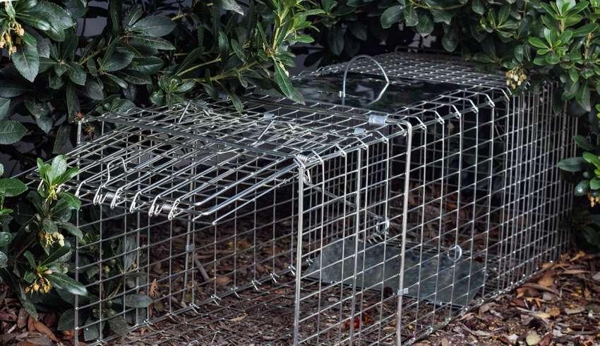 squirrel traps