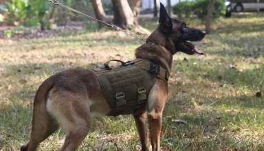 Tactical Service Dog Harness Vest